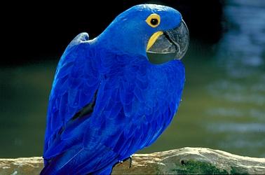 Azul sólo es azul