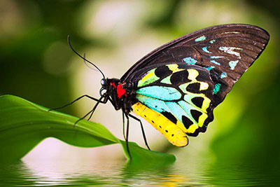 mariposa-creativa