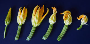 flor-impermanente